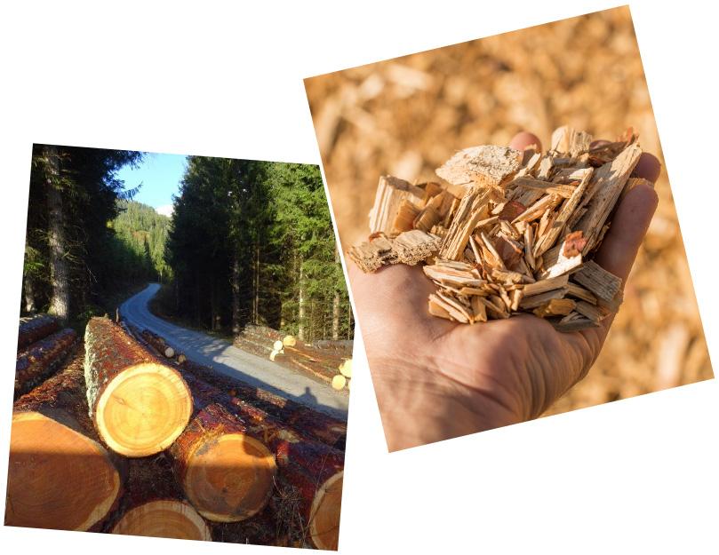 Wirtschaftsraum Holz
